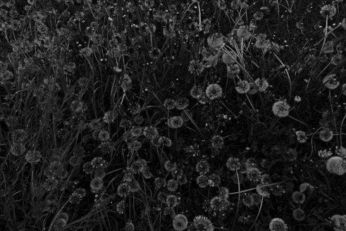 Schubert Fotografie suchergebnisse schubert fotografie page 10