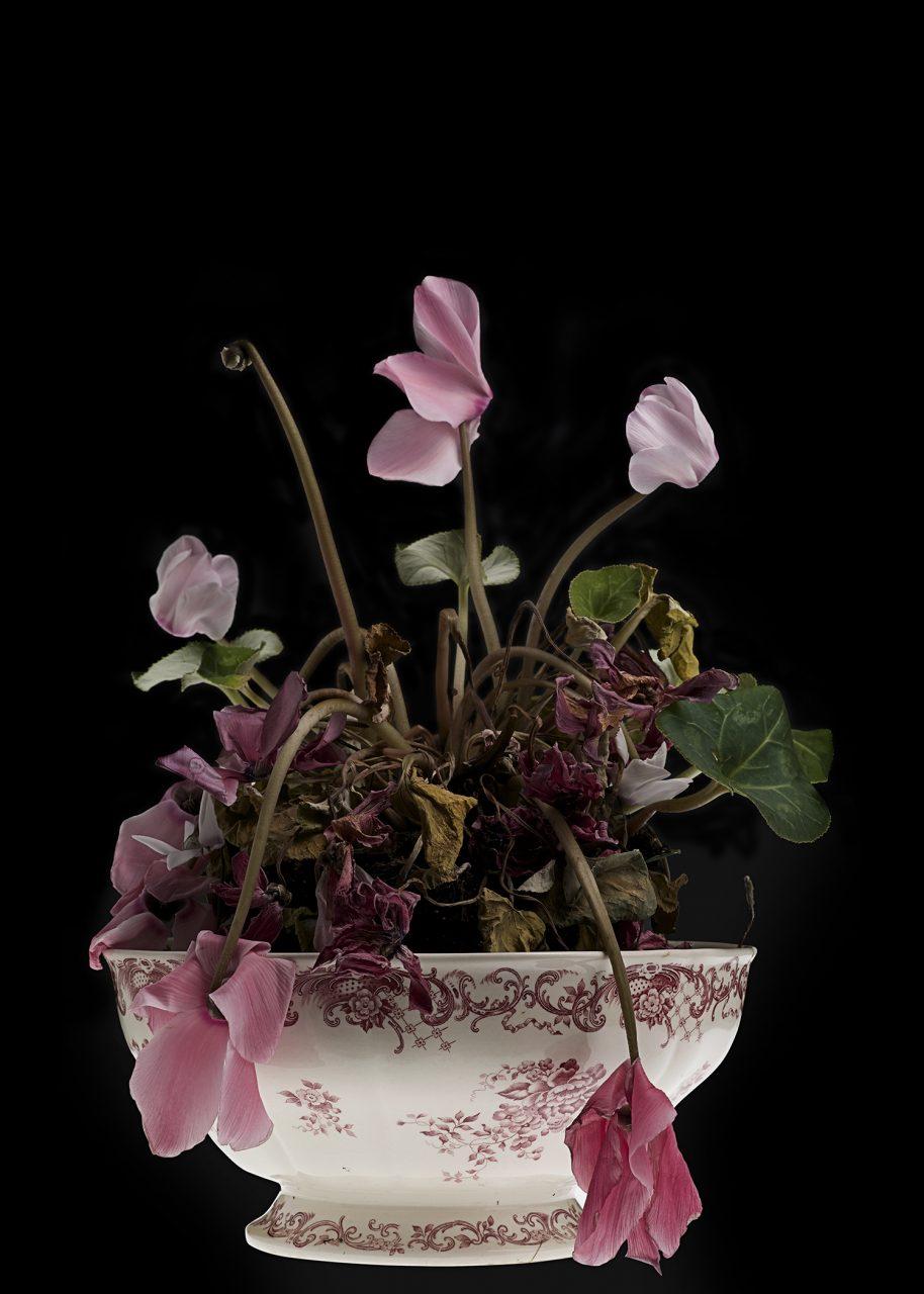 Porzellanblume-rose_SFS3704