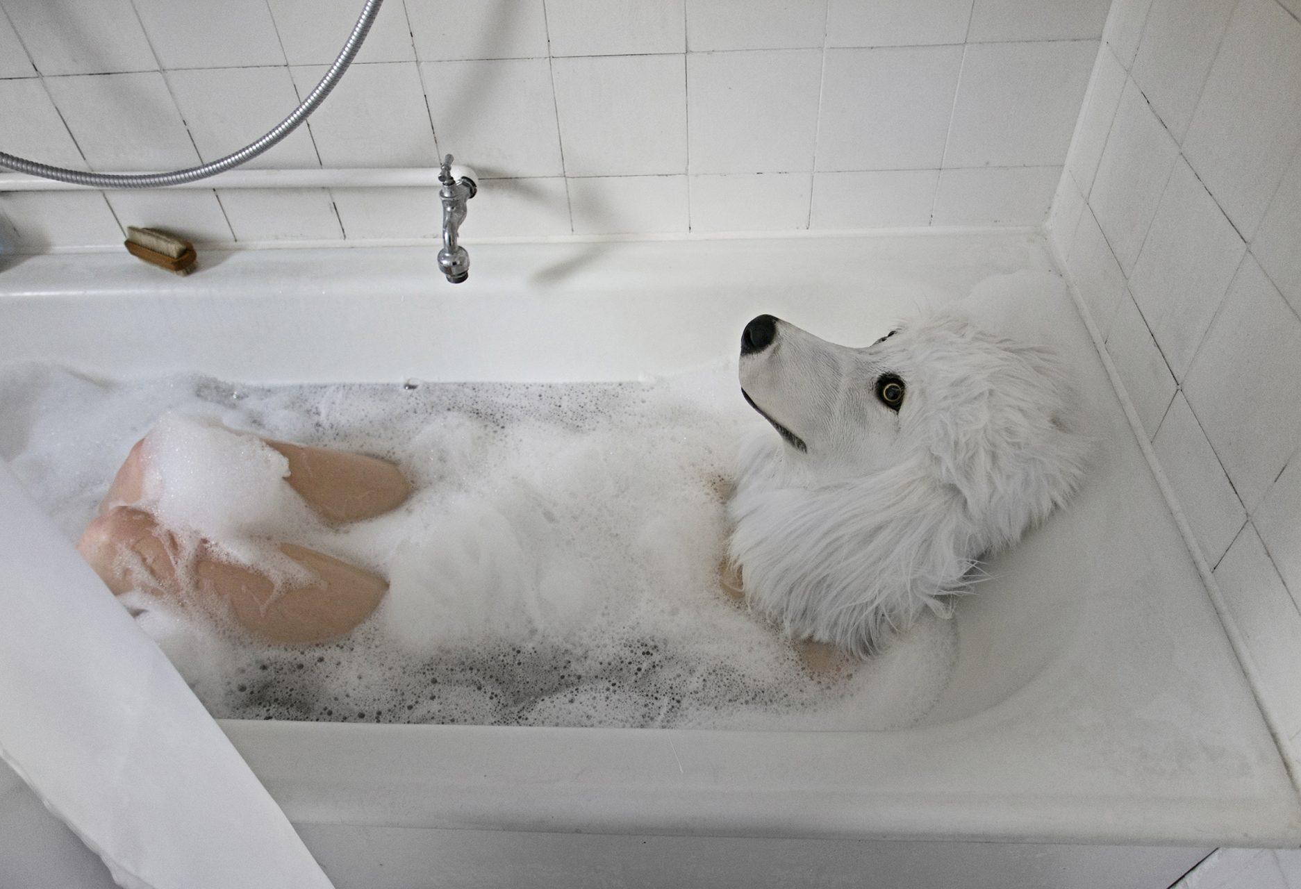 lost-dog-La_1030727HP