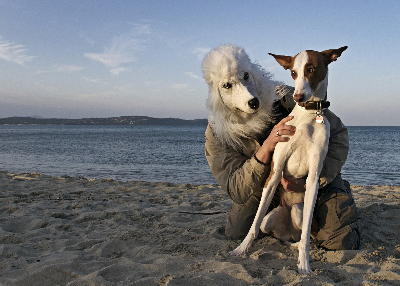 lost-dog-?_1030581-72