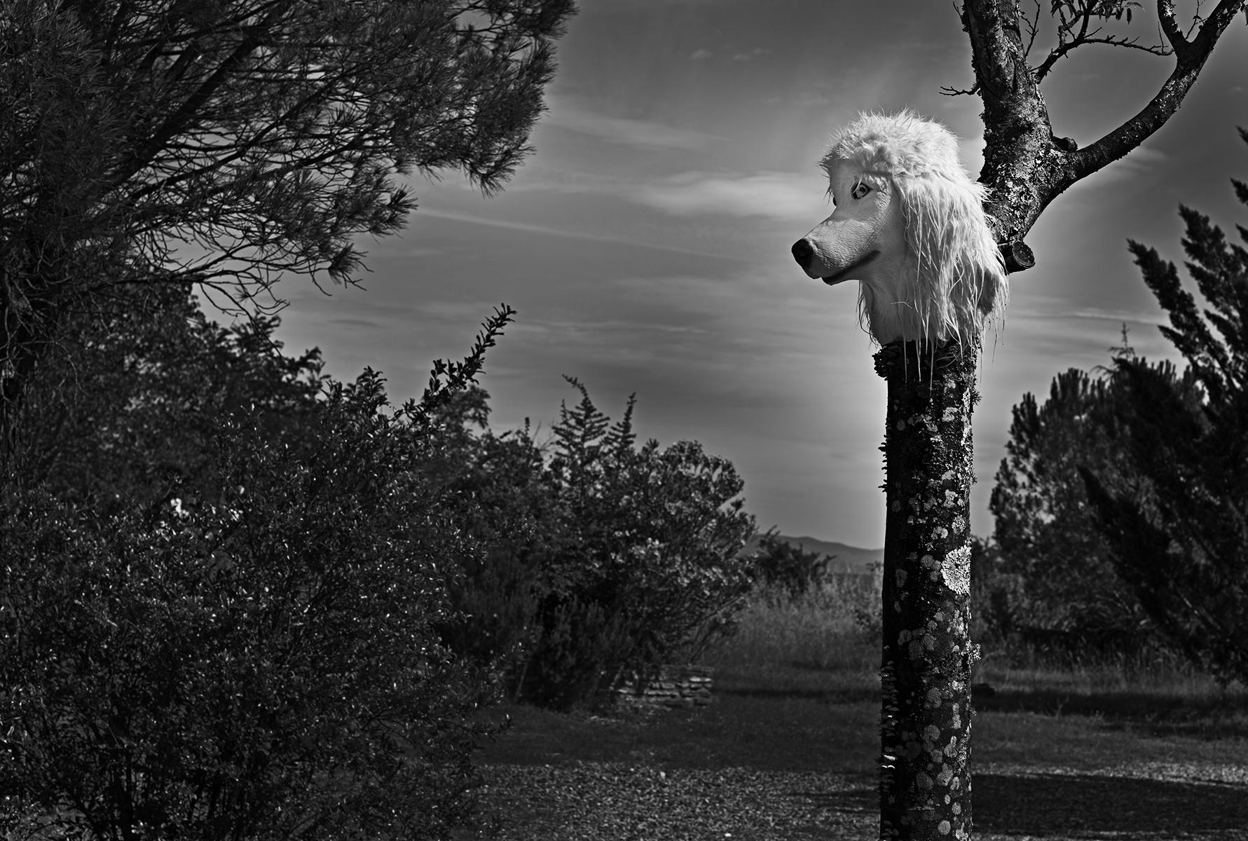 lost-dog-saujette_sfs0883-72