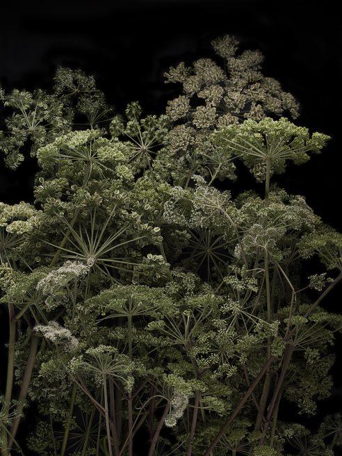 Wald/Wiese