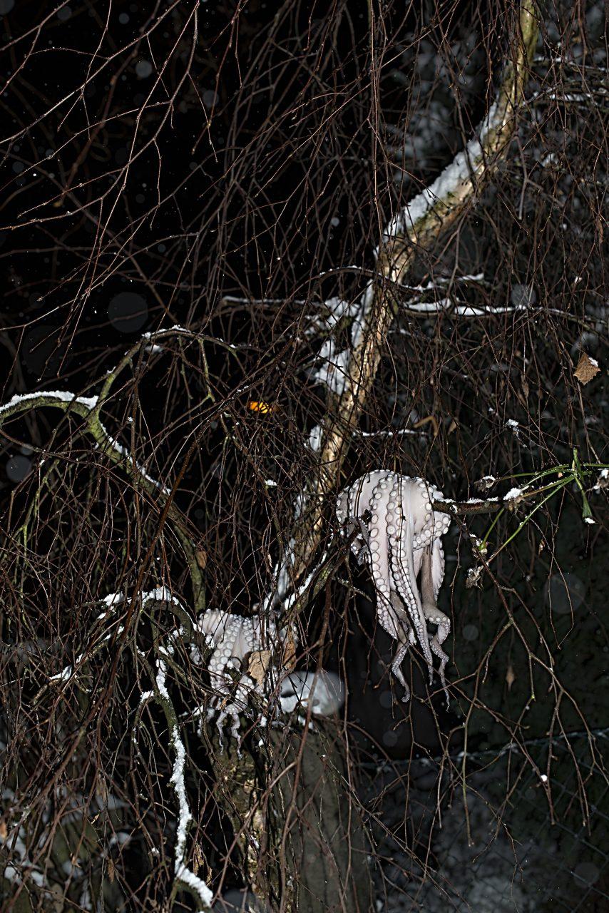 winterpulpo_D802272
